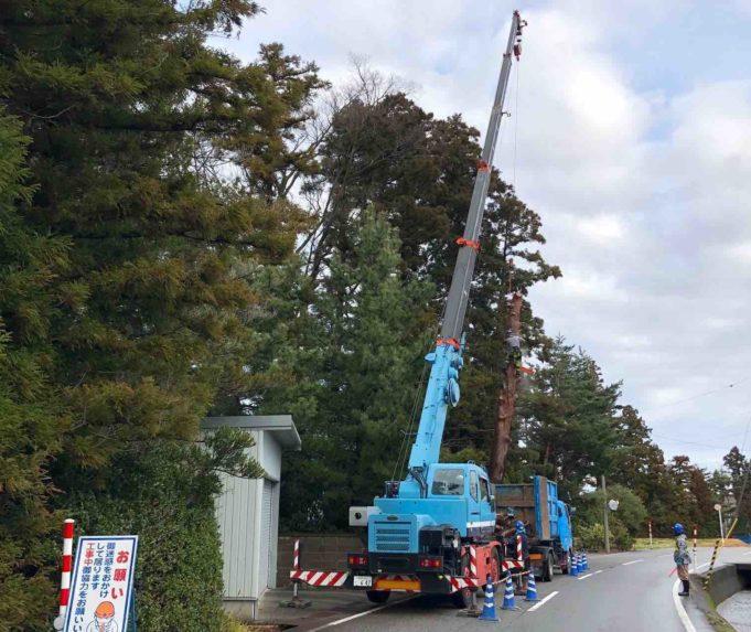 木を伐採する職人の作業写真