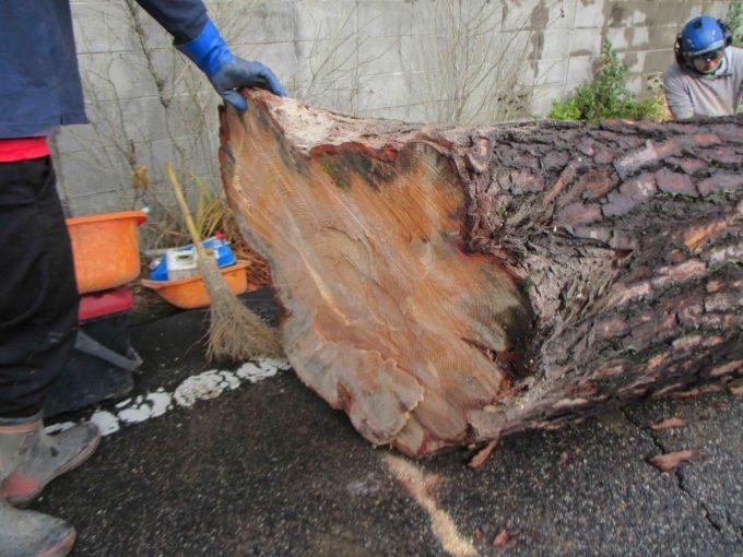 木の伐採工事:切り倒した木の切り株の写真